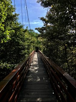 Suspension bridge at Morgan's Rock, Nicaragua