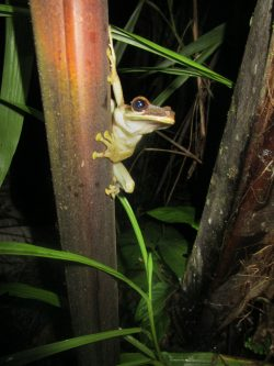Exploring the wildlife at night. A curious frog comes to see who switched the lights on.